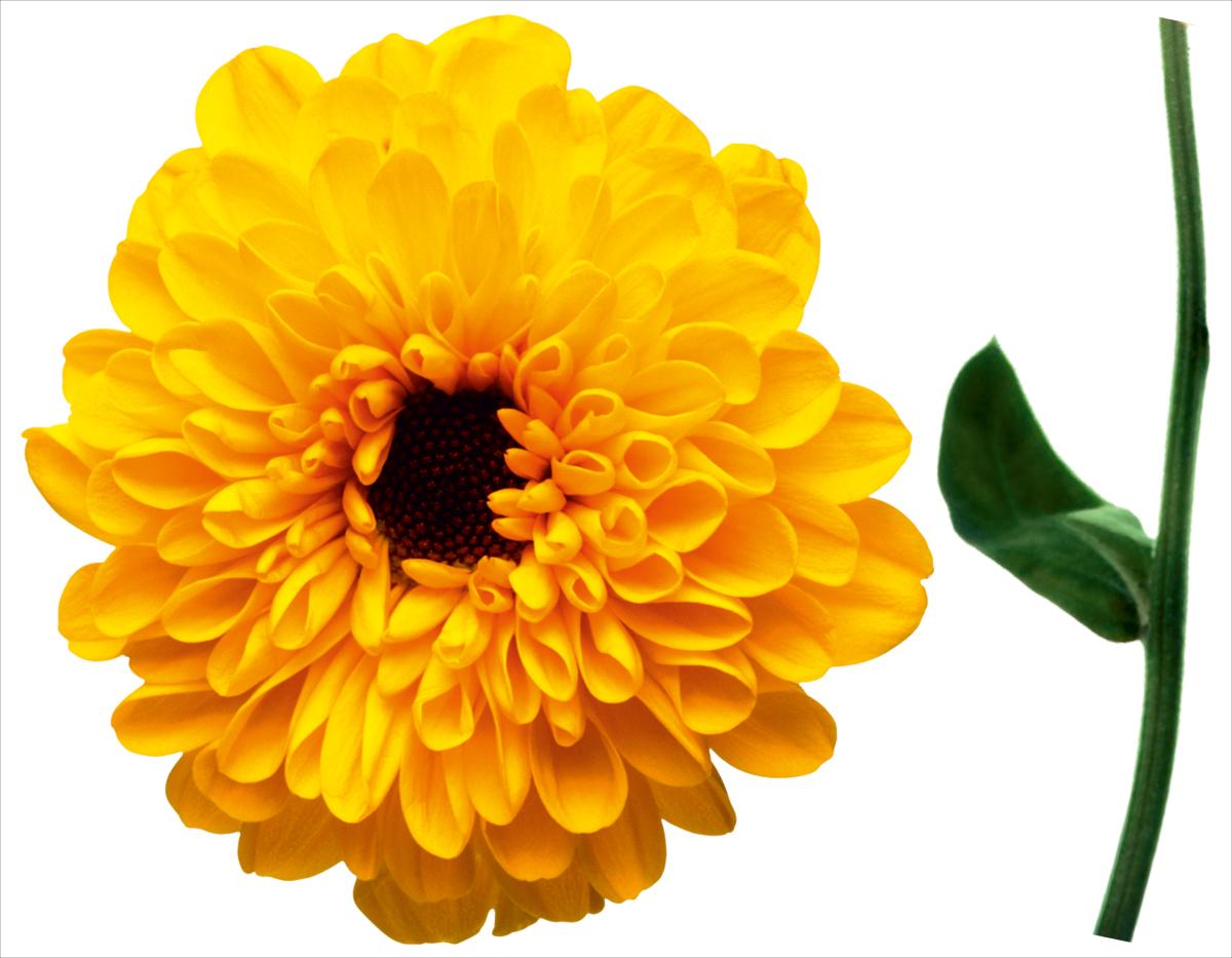 Наклейка декоративная Оранжевый Слоник Цветок, 45 х 35 см наклейки на авто оранжевый слоник виниловая наклейка мото 2