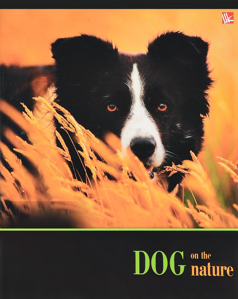 Канц-Эксмо Тетрадь Собаки на прогулке 48 листов в клетку цвет цвет оранжевыйТКЛ484939_оранжевый