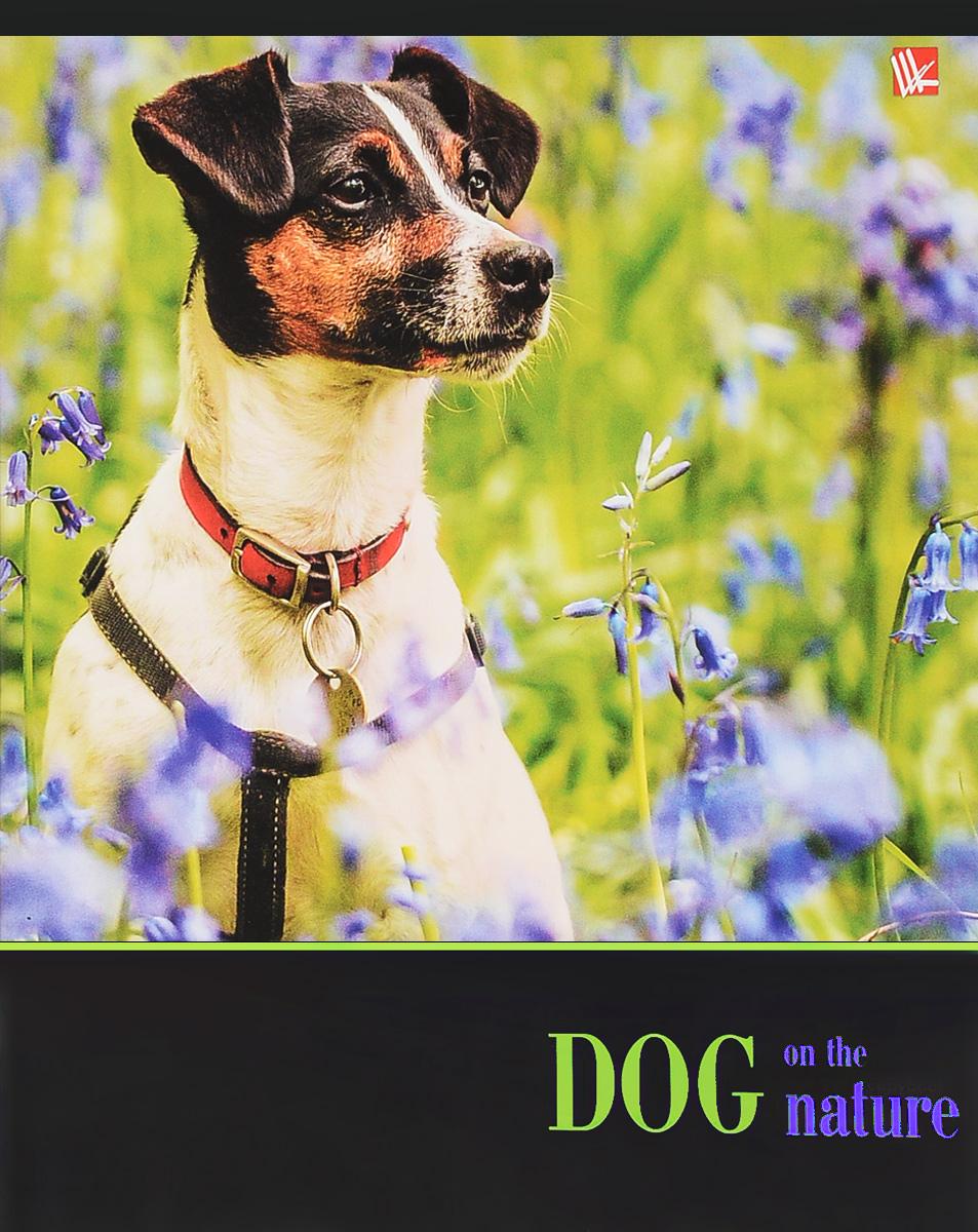 Канц-Эксмо Тетрадь Собаки на прогулке 48 листов в клетку цвет зеленый, фиолетовыйТКЛ484939_зеленый, фиолетовый колокольчикТетрадь Собаки на прогулке: 48 листов, разметка- клетка, цвет- зеленый, фиолетовый.
