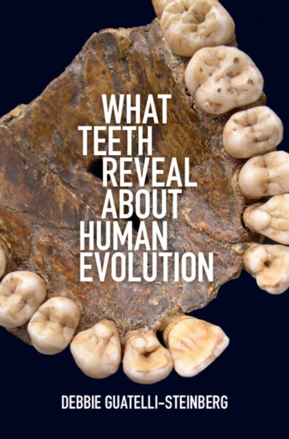 What Teeth Reveal about Human Evolution new arrival dental all teeth removable standard teeth tooth model 28 pcs teeth student learning model