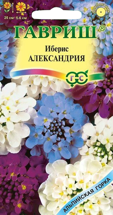 Семена Гавриш Иберис. Александрия4601431018129Однолетние низкорослые растения высотой 25 см, за короткий срок разрастаются и образуют шапки ароматных зонтиковидных соцветий (диаметром 5-6 см) разнообразных окрасок, преимущественно фиолетовых и голубых тонов. Неприхотлив, зимостоек, предпочитает дренированные легкие суглинистые почвы на хорошо освещенных местах. Рекомендуется для бордюрных обсадок, миксбордеров, рокариев, оформления края садовых дорожек.