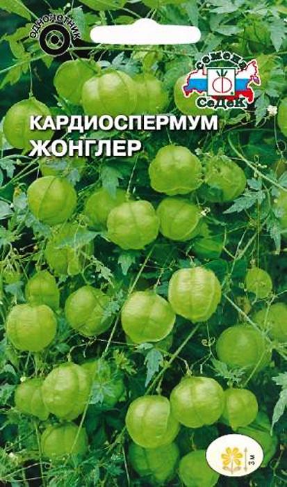Семена Седек Кардиоспермум. Жонглер4607116264447Это растение-лиана особой привлекательности достигает после цветения, в период формирования завязей. Растение длинноплетистое, быстрорастущее, с трехраздельными резными листьями. С помощью усиков быстро поднимается по вертикальной опоре. Цветки мелкие, белые. Сильно вздутые завязи похожи на сердце видные баллончики диаметром 3-5 см. Растение свето- и теплолюбивое, хорошо растет на достаточно влажных, хорошо дренированных почвах. Используется для оформления балконов, пергол, беседок,как ценный флористический материал для декоративных композиций.
