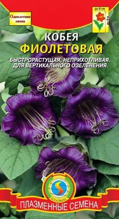 Семена Плазмас Кобея4607171983604Многолетнее вьющееся растение, выращиваемое как однолетнее. Образует многочисленные побеги до4м длиной. Цветки светло- или темно-фиолетовые, колокольчатые, до8см вдиаметре. Растение свето- итеплолюбиво. Листья перистые, несколько морщинистые, оканчиваются разветвленным усиком, при помощи которого растение закрепляется наопоре. Используют ввертикальном озеленении, набалконах.Посев нарассаду вфеврале- начале марта. Семена взойдут быстрее, если ихпредварительно прорастить донаклёвывания. Блюдце срасположенными внём навлажной бумаге семенами помещают впленочный пакет идержат насвету, при температуре нениже 20°С.Если появится слизь или плесень, промойте семена исмените бумагу. Проклюнувшиеся семена положите врыхлый, легкий субстрат плоской стороной вниз горизонтально, поодному вгоршочки диаметром 8-10 см, наглубину 1-1,5 см. Сеянцы пикируют поодному вгоршочки встадии появления первого настоящего листа. Для опоры ставят колышки. Воткрытый грунт растения высаживают вконце мая— начале июня.