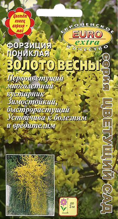 Семена Аэлита Форзация. Золото весны форзиция кустарник в питомнике