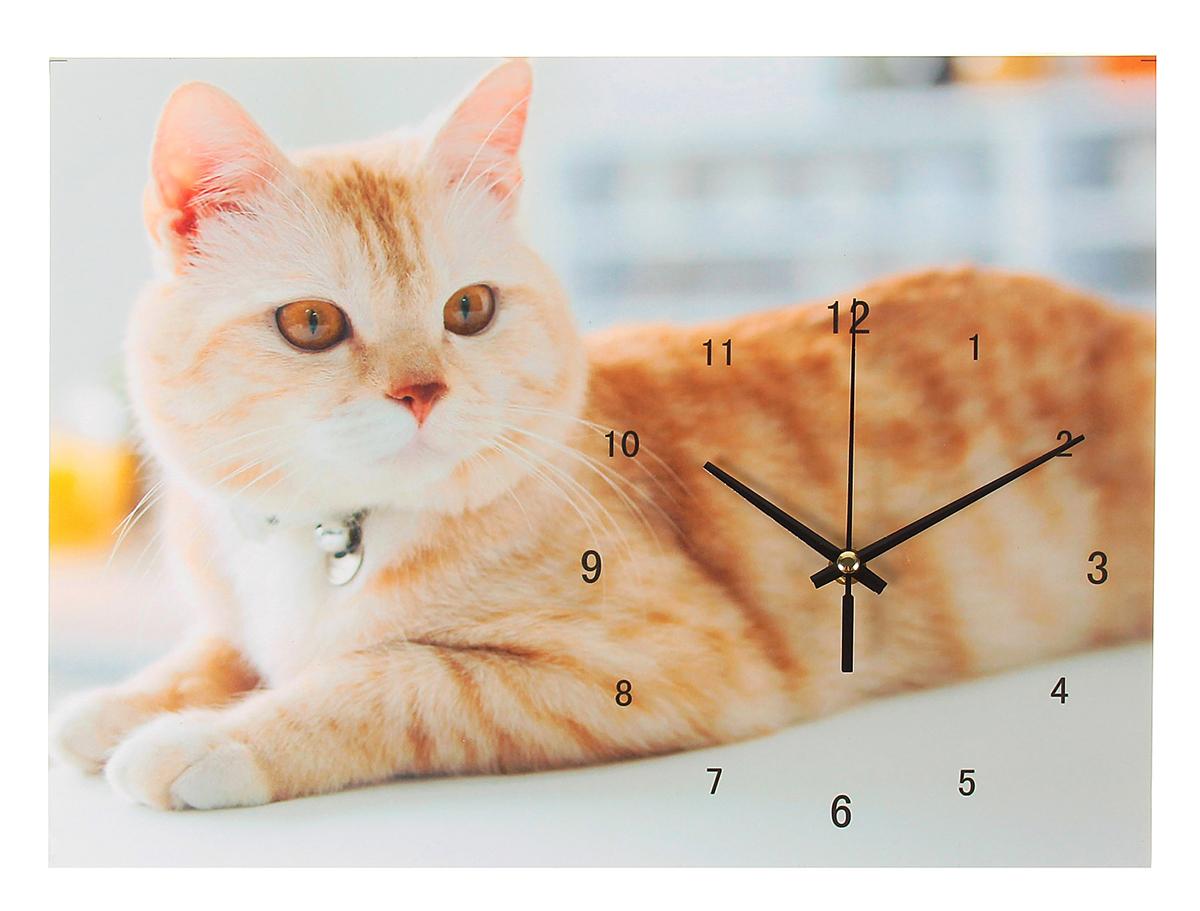 Часы настенные Кошка, 30 х 40 см хочу продать свою квартиру которая менее 3х лет и другую какие налоги надо заплатить