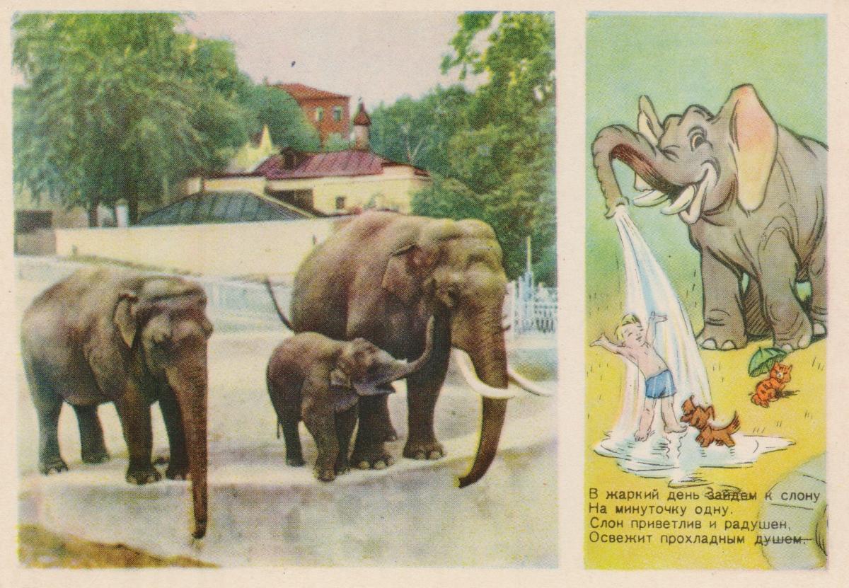 В жаркий день зайдем к слону… ОткрыткаПО0902017-0018Тираж: 1000000 экз.