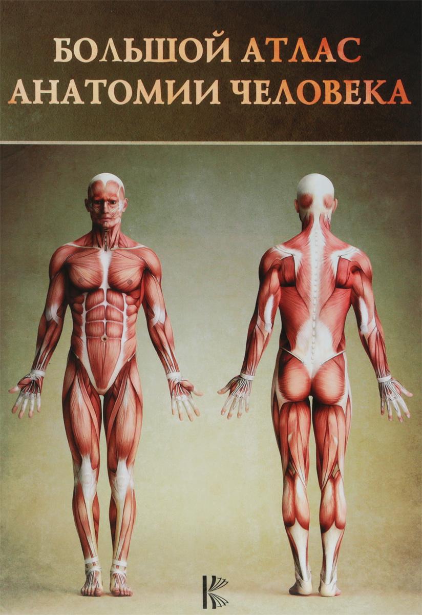 Винсент Перез Большой атлас анатомии человека ISBN: 978-5-17-082-979-8, 978-142320172-4 анатомия человека русско латинский атлас