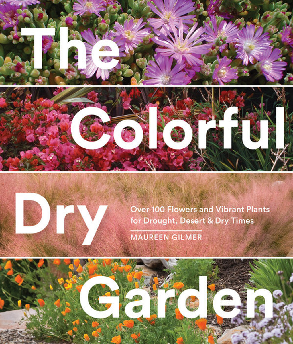 The Colorful Dry Garden spring in the garden flowers and seedlings