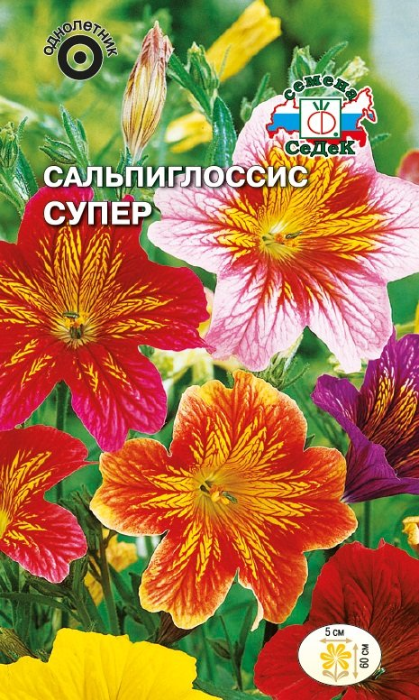 Семена Седек Сальпиглоссис. Супер семена седек томат альфа