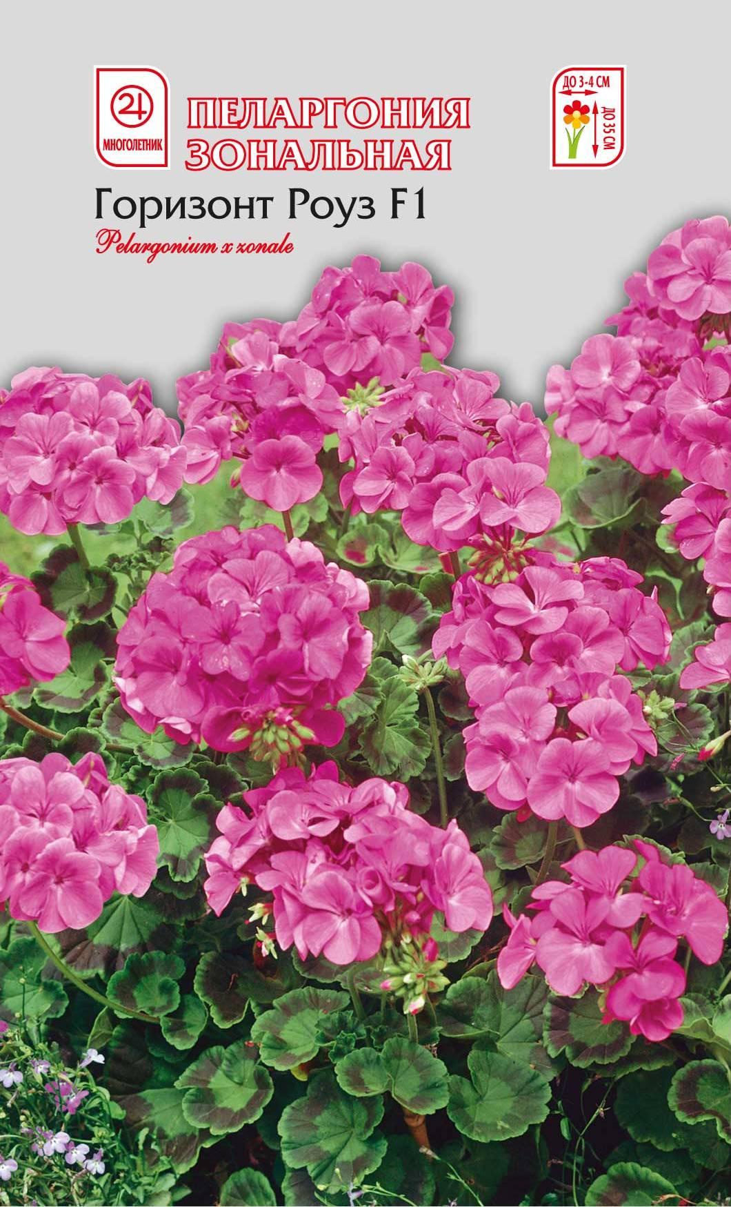 Семена Семена Алтая Пеларгония зональная. Горизонт Роуз4620009639832Многолетник. Одно из самых распространенных и любимых комнатных и балконных растений. Великолепный гибрид. Цветы простые, крупные, до 3-4 см в диаметре, собраны в огромные шапки красивого ярко-розово-малинового цвета. Раннее и обильное цветение. Формирует объемный компактный куст высотой 35 см. Одно из самых неприхотливых растений. Уход за ним не требует значительных усилий. Пеларгония светолюбива, легко переносит недостаток влаги. В теплое время любит обильный частый полив, в зимнее — поливают умереннее. Подкармливают растения калийными удобрениями. Посев производят с января по март. Всходы появляются через 2-3 недели после посева. При появлении 2-3 настоящих листьев растения пикируют. Для увеличения количества побегов и лучшего цветения побеги прищипывают в фазу 4-5 пар листьев. Используют в озеленении лоджий, веранд, балконов, а также для создания композиций в саду.