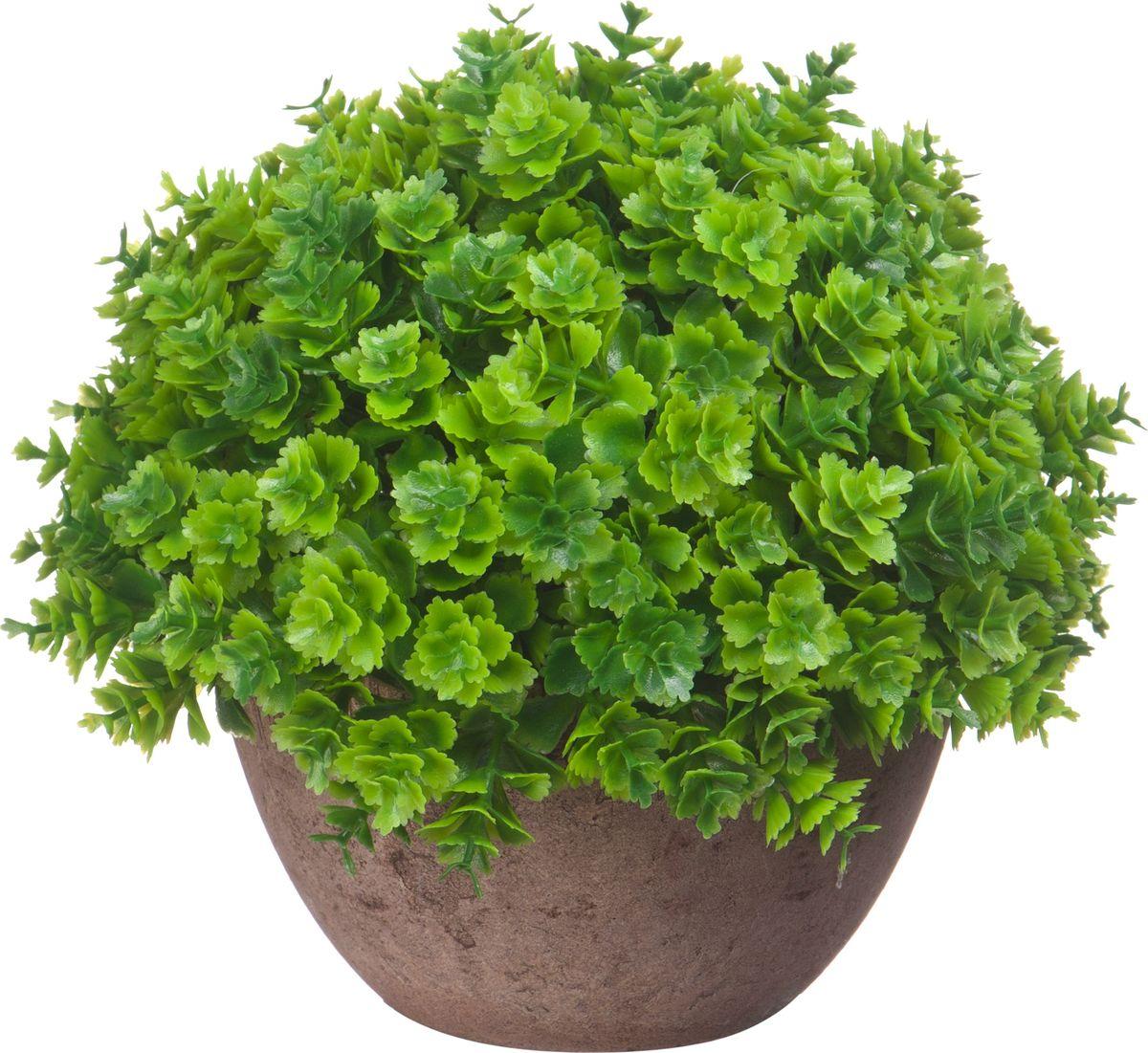 Композиция цветочная Engard Азалия, в кашпо, мелкие листья, цвет: зеленый, 15 х 13,5 смB18зел.мелколистИскусственные цветы Engard - это популярное дизайнерское решение для создания природного колорита и гармонии в пространстве. Декоративная азалия высотой 15 см выглядит аккуратно и довольно реалистично. Керамический горшок цвета эспрессо прекрасно впишется в любой интерьер.