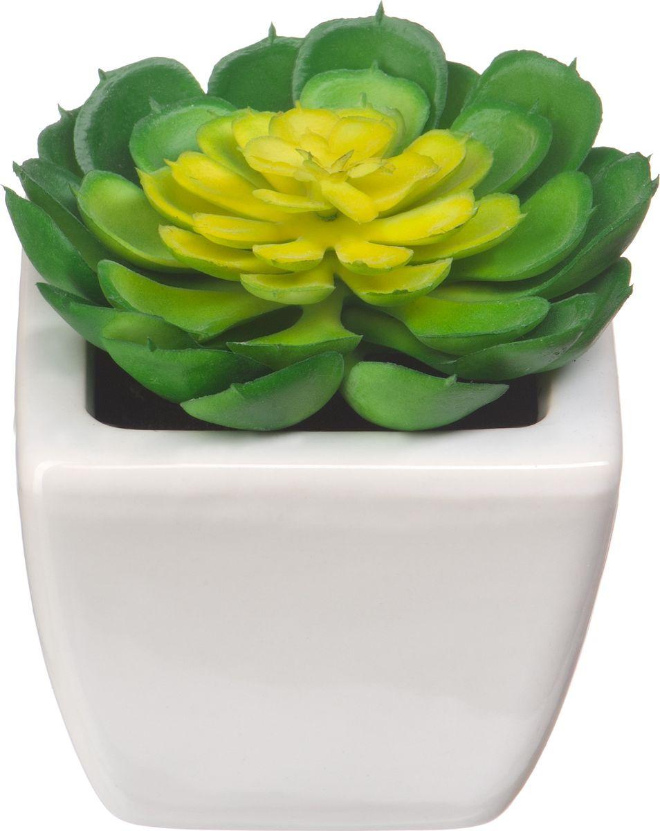 Композиция цветочная Engard Молодило, в кашпо, 9,5 х 7,5 х 7,5 см кашпо engard цвет желтый 12 5 х 10 х 13 см