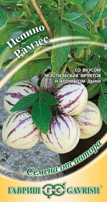 Пепино, или дынная груша (Solanum muricatum), – экзотическое растение семейства Пасленовые (Solanaceae), родина которого Южная Америка (Перу, Чили, Эквадор). Многолетник (отрицательных температур не выносит) с сильноветвящимися зелеными побегами, которые имеют фиолетовый оттенок, и простыми или сильнорассеченными темно-зелеными листьями. Растение может разрастаться на значительной площади. По силе роста сравнимо с крупным баклажаном и в теплице может достигать 1-1,5 м.Плоды у дынной груши вырастают крупные, массой 200-750 г каждый. Когда созревают, становятся лимонно-желтыми или светло-оранжевыми, с продольными сиреневыми полосками. По вкусу мякоть диковинки напоминает зрелую сочную дыню, чаще всего с ароматом тропических фруктов, но иногда и со слабым перечным привкусом. Оптимальные условия для выращивания растения, кроме высокой влажности почвы и воздуха, умеренные температуры в пределах 20-25 С. В открытый грунт в средней полосе рекомендуем сажать это растение ограниченно, только в самых теплых солнечных местах, в те сроки, когда уже не будет угрозы заморозков (если вы не можете защитить от них растения), т. е. не ранее 5-11 июня. В открытом грунте вы получите вызревшие плоды только в том случае, если лето будет теплым. Лучше всего выращивать пепино в защищённом грунте. Оптимальный период для посева – с конца ноября по конец декабря. Сорт Рамзес более холодостоек и не сбрасывает завязи при ночных температурах 15– 16 °С. Проращивать лучше в небольших герметичных емкостях уплощенной формы с прозрачной, плотно прилегающей крышкой. До наклевывания семян проходит от 3 до 30 дней. Вплоть до образования семядольных листочков семена находятся под лампой 24 ч в сутки. После образования семядольных листьев сеянцы пикируют в горшочки с легкой почвой, так как корни пепино очень чувствительны к недостатку воздуха в почве. В период выращивания рассады питание, полив и температурный режим такие же, как у рассады перца и баклажана. На постоянное место рассаду высаживают в марте–