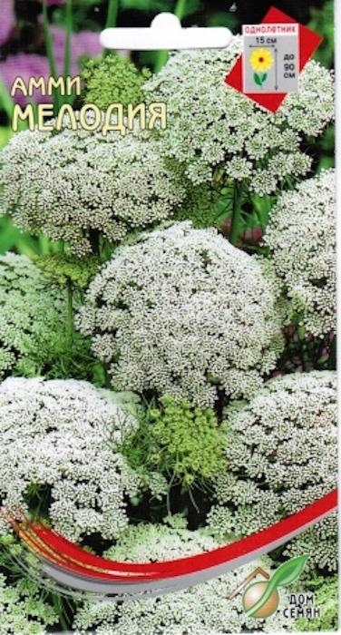 Амми - двулетнее, в культуре однолетнее травянистое растение семейства зонтичных. Высота до 90 см. Соцветие - густой сложный зонтик диаметром до 15см. Цветки имеют зеленовато-белую окраску, а перед увяданием становятся золотистыми с зеленым оттенком. Этот вид амми красив и декоративен и его широко используют в бордюрах и для срезки. Посев: семян производят с конца апреля. Всходы появляются через 12-15 дней.