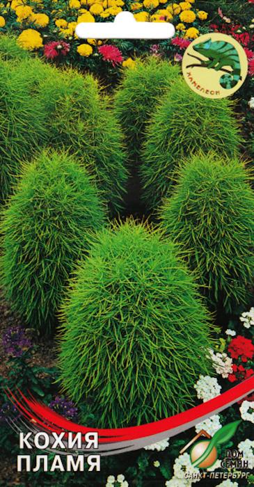 Семена Сортсемовощ Кохия. Пламя4601819475001Однолетний быстрорастущий декоративный кустарник высотой до 1 метра. Идеально подходит для одиночных посадок, смешанных клумб и живой изгороди. Можно стричь. Растение не цветет, осенью приобретает багровую окраску. Посев на рассаду в марте-апреле. Всходы появляются через 7-14 дней при температуре 18-20 С. Рассаду высаживать в грунт, когда минует угроза заморозков. Расстояние между растениями 30-50 см. Можно сеять в мае открытый грунт. Уход заключается в регулярных поливах, рыхлениях, подкормках. Предпочитает солнечное место.
