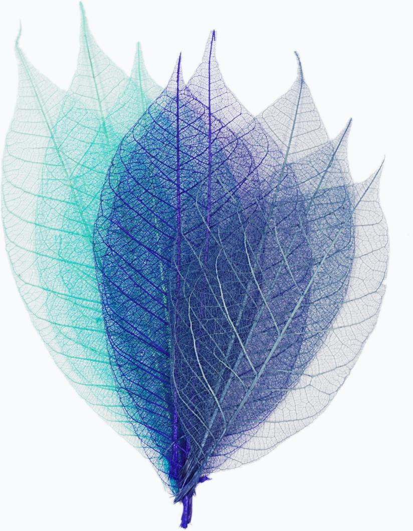 Набор скелетированных цветов ScrapBerrys, цвет: синий, длина 8 см, 8 шт694917Популярны при работе в техниках скрапбукинга и декупажа. Подойдут для украшения посуды, декоративных плафонов на светильники и др. Можно применять во флористике.Окрашены в различные оттенки синего цвета. Длина одного листочка: 8 см.В наборе 8 шт.