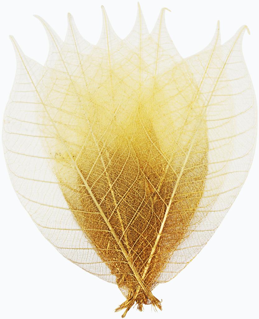 Набор скелетированных цветов ScrapBerrys, цвет: светло-коричневый, длина 8 см, 8 шт694914Популярны при работе в техниках скрапбукинга и декупажа. Подойдут для украшения посуды, декоративных плафонов на светильники и др. Можно применять во флористике.Окрас листа: медно-коричневый деграде.Длина одного листочка: 8 см.В наборе 8 шт.