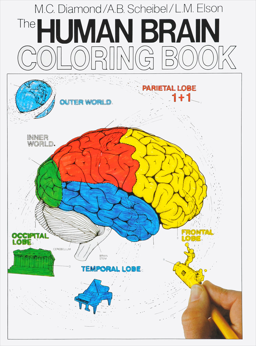 The Human Brain Coloring Book color the classics anne of green gables a coloring book visit to avonlea