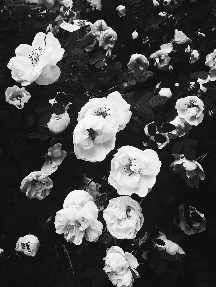 Черно-белая фотография шиповника. Рама не входит в стоимость. Превью является примером размещения в интерьере.