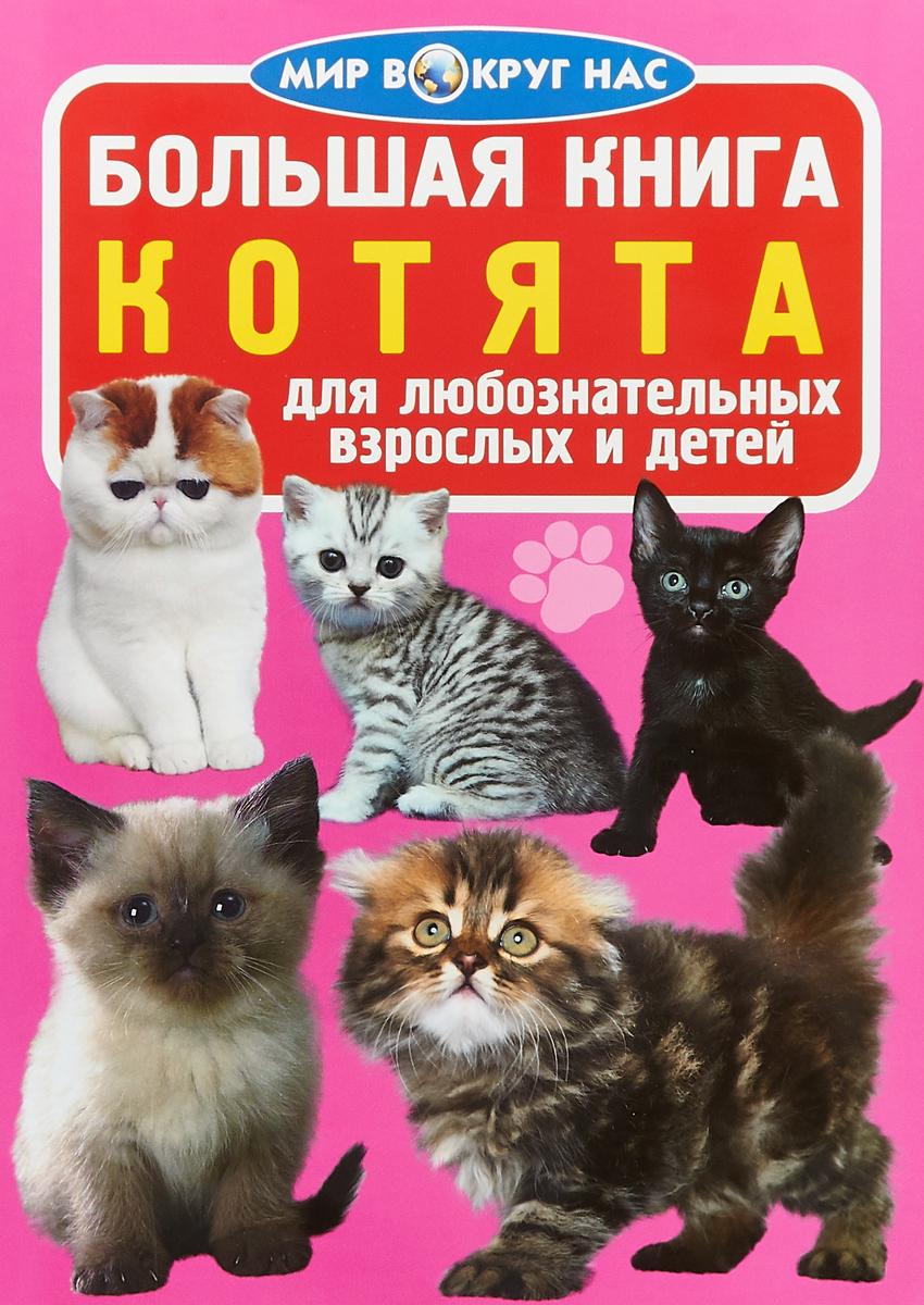 О. В. Завязкин Большая книга. Котята. Для любознательных взрослых и детей