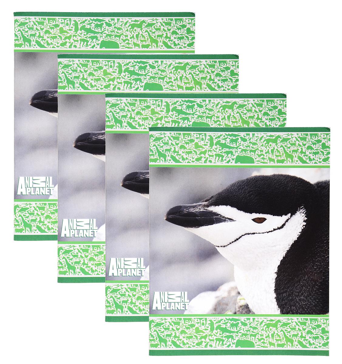 Action! Набор тетрадей Animal Planet Птицы 48 листов в клетку 4 шт ктс про набор тетрадей вид из окна 48 листов в клетку цвет бордовый 5 шт
