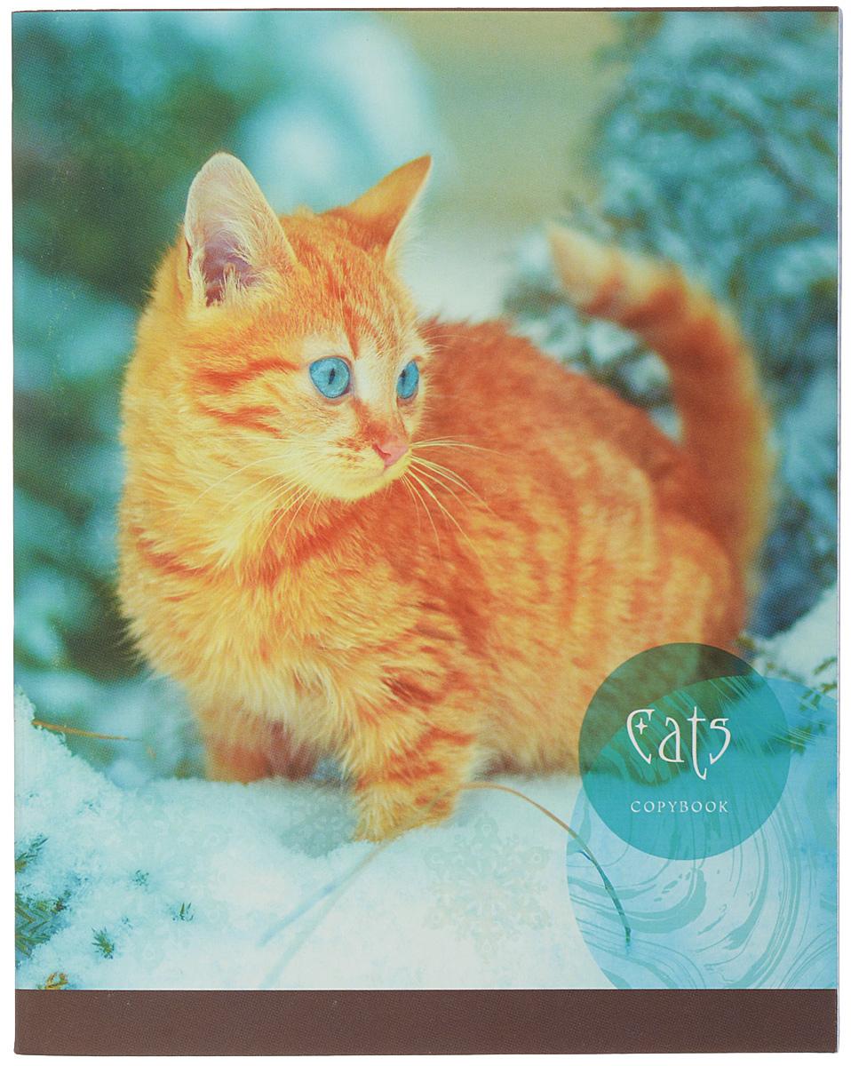 Комплект тетрадей 48 листов на скрепке Любимые кошки формата А5 незаменимый инструмент для учеников старших классов и студентов. Красочный дизайн обложки с отделкой выборочный лак улучшает зрительное восприятие, повышает красочность и цветовую насыщенность.