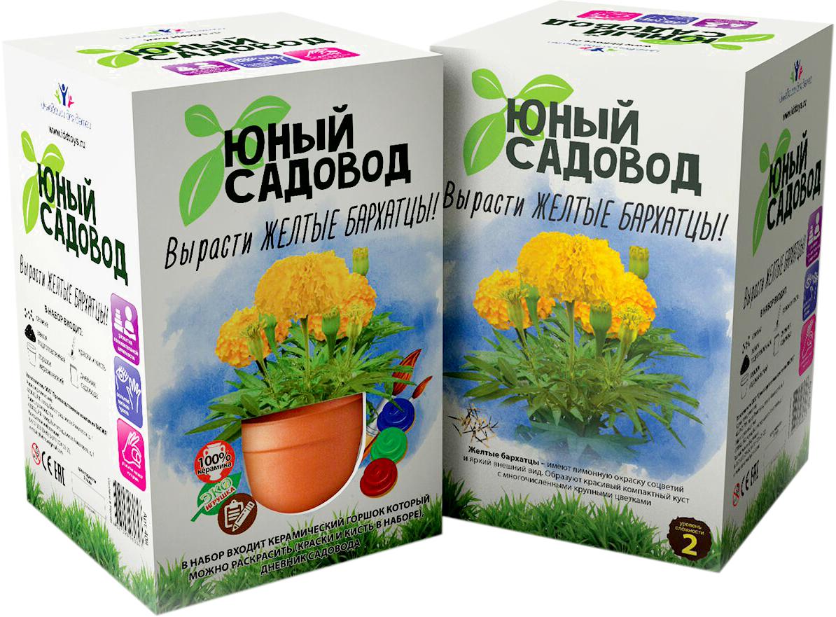 Висма Набор для выращивания Вырасти желтые бархатцы