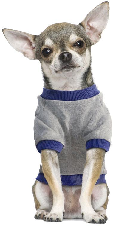 Толстовка для собак TriolDisney  Minnie College , цвет: серый, синий. Размер M - Одежда, обувь, украшения