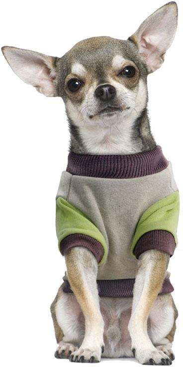 Толстовка для собак TriolDisney Pluto College, цвет: серый, зеленый. Размер L поводки triol поводок со светоотражающей строчкой серый размер l 25 x 1200мм