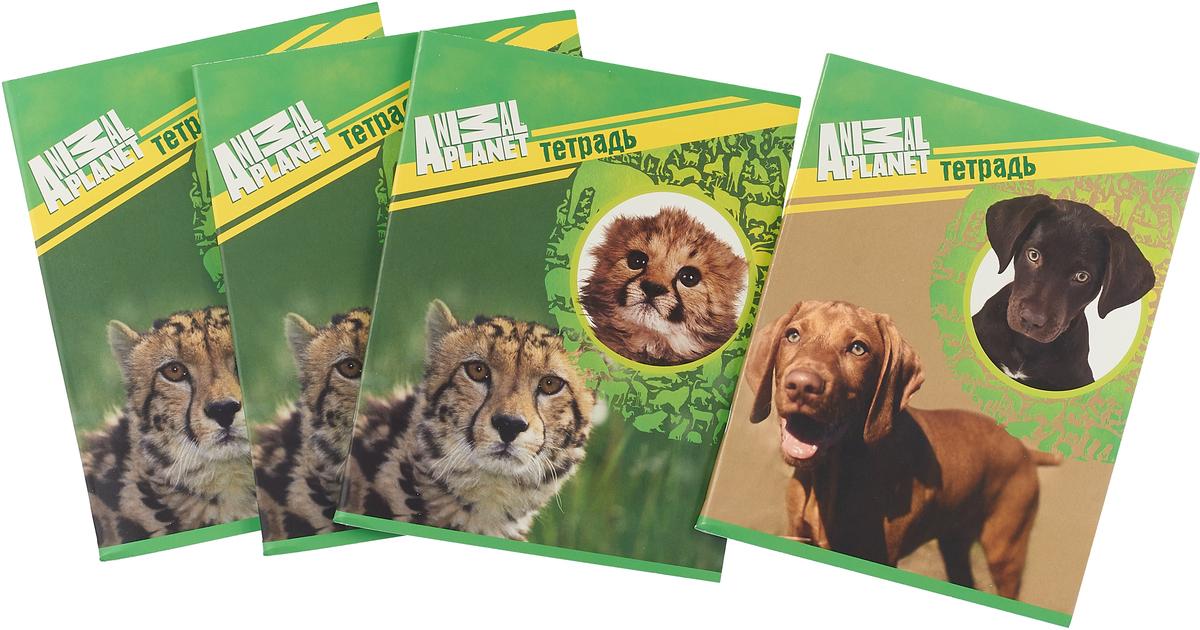 Action! Набор тетрадей Animal Planet Кошки 96 листов в клетку 4 шт