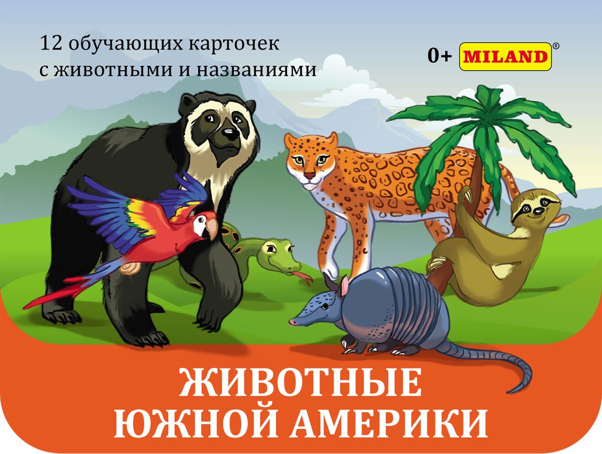MilandОбучающая игра Животные южной Америки Miland