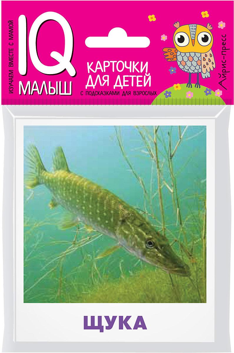 Айрис-пресс Обучающая игра Умный малыш Пресноводные рыбы глушенков о пресноводные рыбы