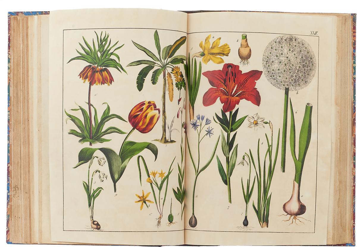 Естественная история растительного царства преимущественно в применении к русской флоре средних губерний.