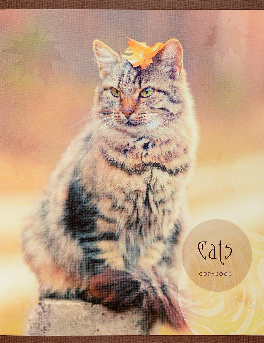 Unnika Land Тетрадь Любимые кошки 48 листов в клетку вид 4