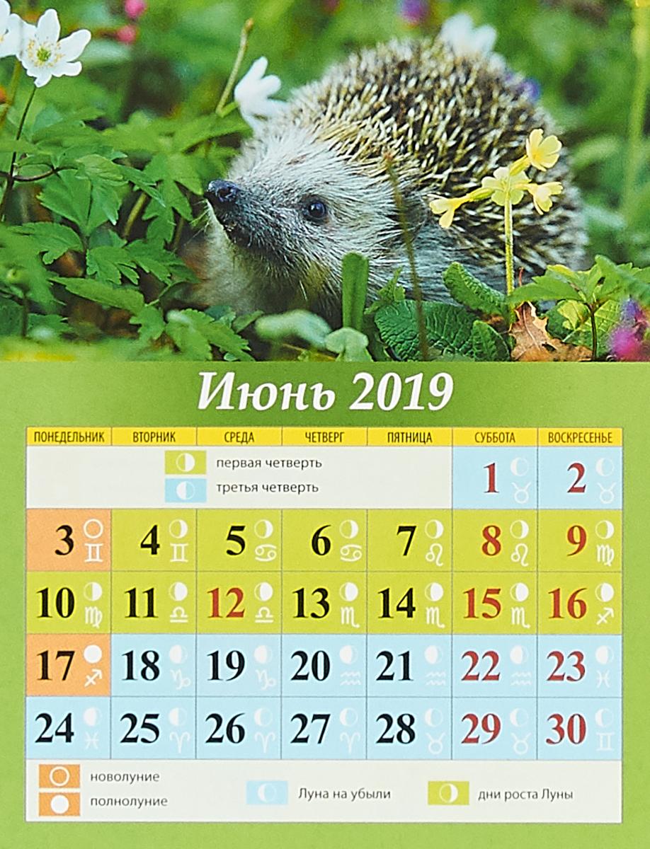 Календарь 2019 (на магните). Лунный календарь с фазами луны.