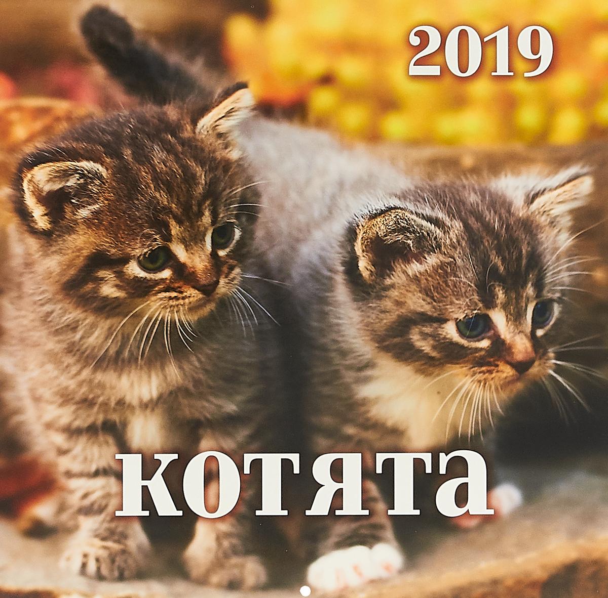 Календарь 2019 (на спирали). Котята календарь на 2016г домашние любимцы щенки 36 34см на спирали