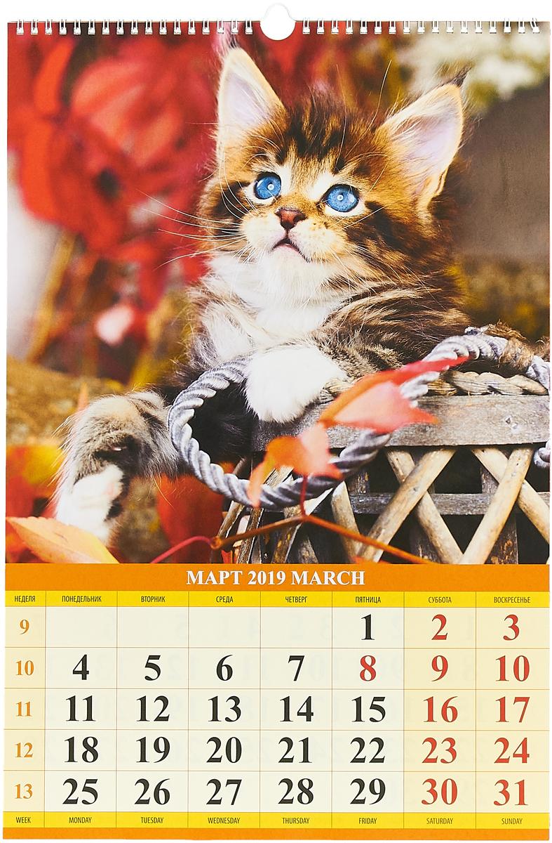 Котята (320*480). Календарь 2019.