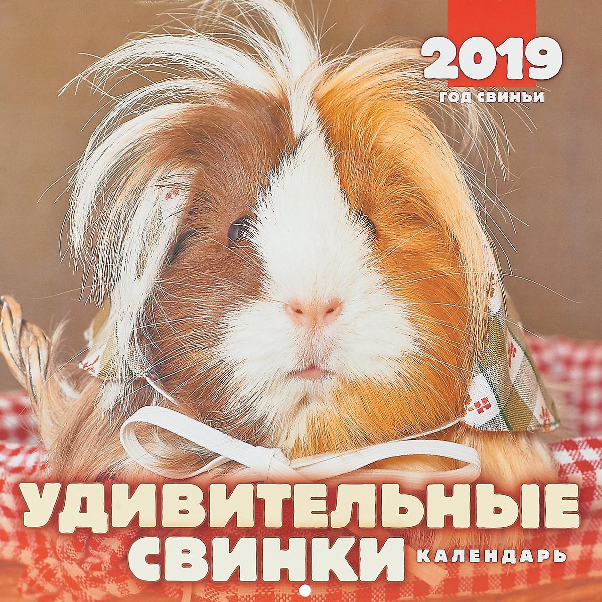 Календарь. 2019 г. Перекидной. 28,5х28. Удивительные свинки