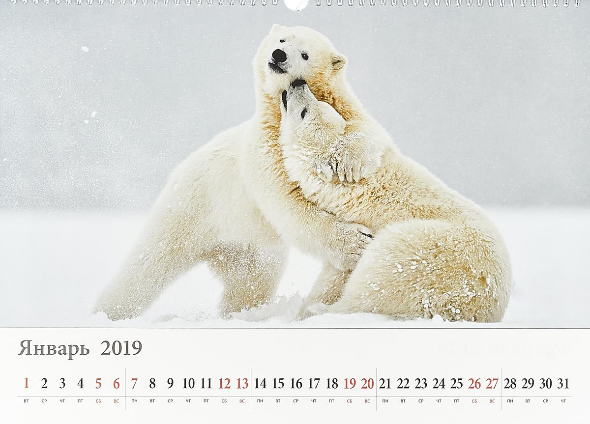 Календарь на спирали на 2019 год. Белый мир.