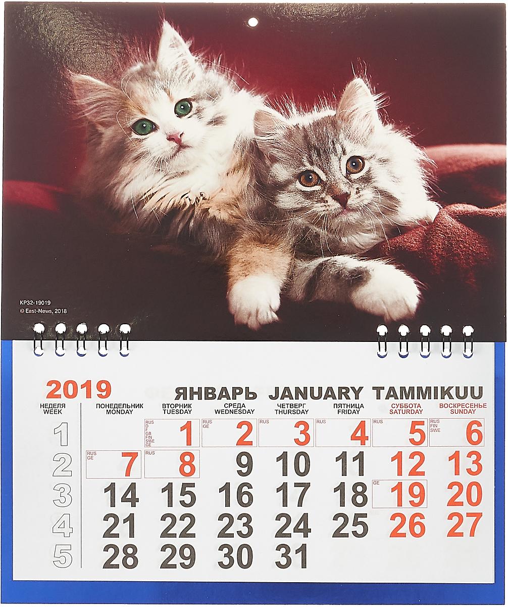 Календарь отрывной  на 2019 год. Котята.