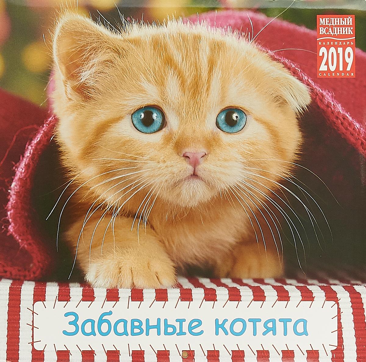 Календарь на скрепке на 2019 год. Забавные котята календарь на скрепке кр10 на 2019 год спб и пригороды 30 30см [кр10 19005]