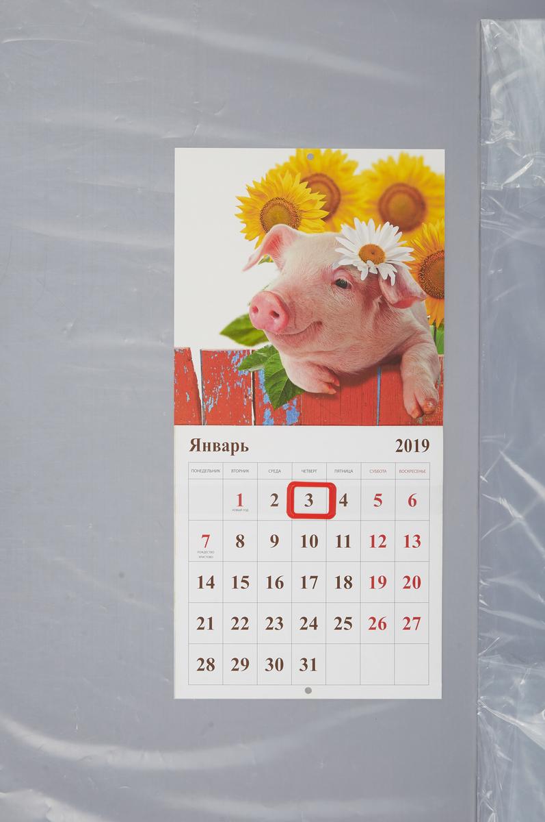 Календарь на скрепке  с курсором  на 2019 год. Год Свиньи.