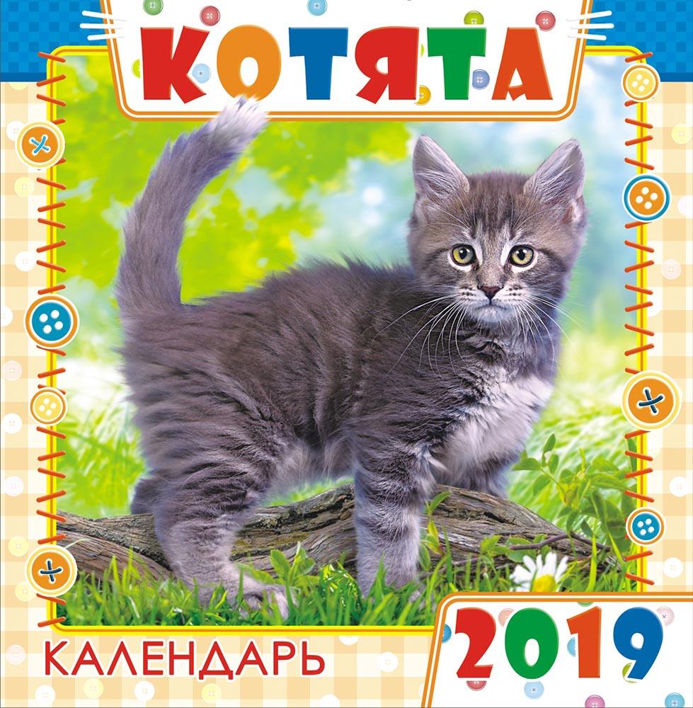 Календарь на 2019 год (на скрепке). Серый забияка
