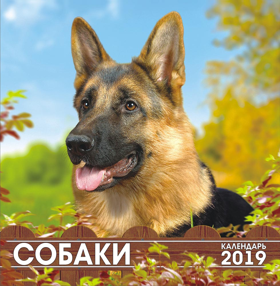 Календарь на 2019 год (на скрепке). Собаки