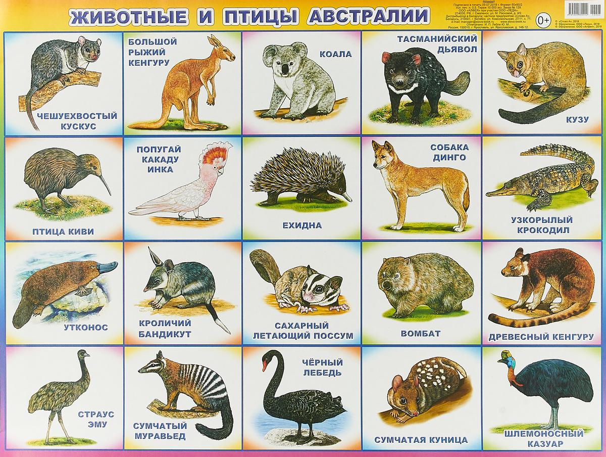 Животные и птицы Австралии