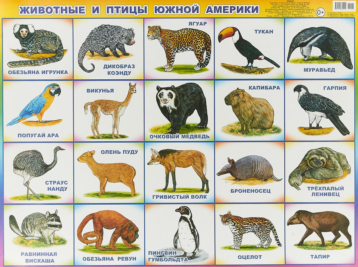 Фото - Животные и птицы Южной Америки животные южной америки дидакт карточки
