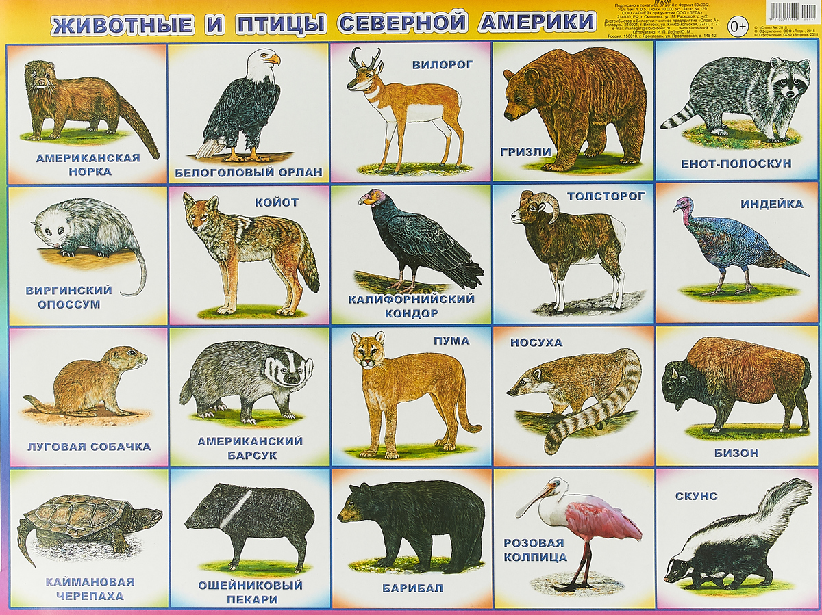 Животные и птицы Северн Америки