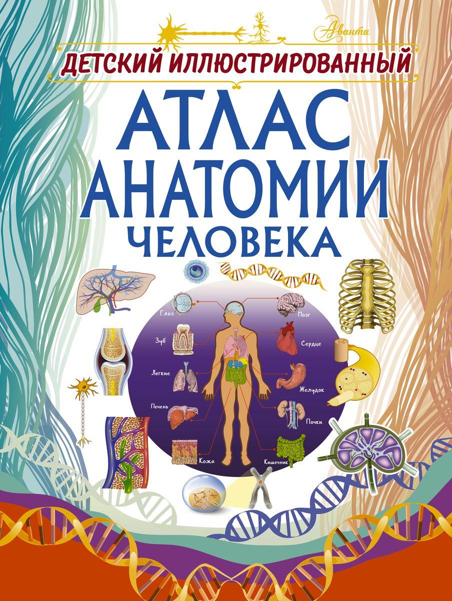 Спектор Анна Артуровна Детский иллюстрированный атлас анатомии человека