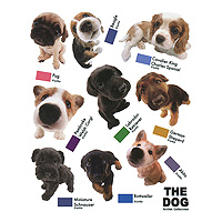 Виниловая наклейка Dog, 57 х 70 см