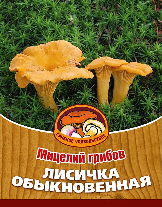 Мицелий грибов Лисичка обыкновенная, субстрат, 60 млSS 4041Лисички можно приготовить по-разному: пожарить, отварить, засушить, замариновать или засолить, также потрясающе вкусны соусы из лисичек.Благодаря мицелию грибов Лисичка обыкновенная теперь вы без труда сможете вырастить любимые грибы у себя в саду или дома. И уже через год после посадки у вас появится первый урожай грибов. За один год можно собрать до 1/2 ведра с одного дерева. Для того чтобы вырастить грибы вам понадобится: мицелий Грибное удовольствие, дерево на дачном участке, лесная почва, лопата, мох, листовой опад, ветки. Благоприятное время для посадки мицелия Лисичка обыкновенная - круглый год.Плодоносят мицелии в среднем от 3 до 5 лет, в зависимости от сорта грибов. Характеристики:Материал:субстрат. Объем:60 мл. Размер упаковки:11 см х 15,5 см. Артикул:10014.